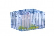 rooster in cage